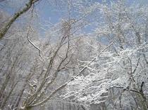 3月 *雪の華*