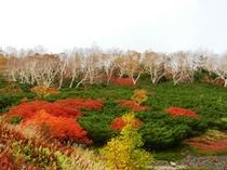 10月上旬、乗鞍岳の紅葉
