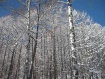 新雪、輝く朝。