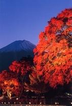 富士山ともみじ