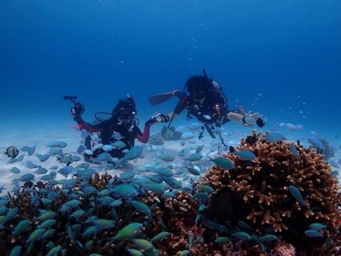 サンゴのお城を覗いてみましょう