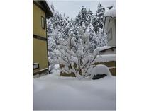 【美山の雪】