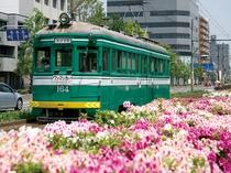 チンチン電車は堺の街を走り抜け、明治44年以来約100年間続く街の風物詩。