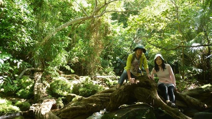 西表島のジャングルの中をピクニック!大自然と触れ合うウキウキプラン♪【朝昼食付】(禁煙)