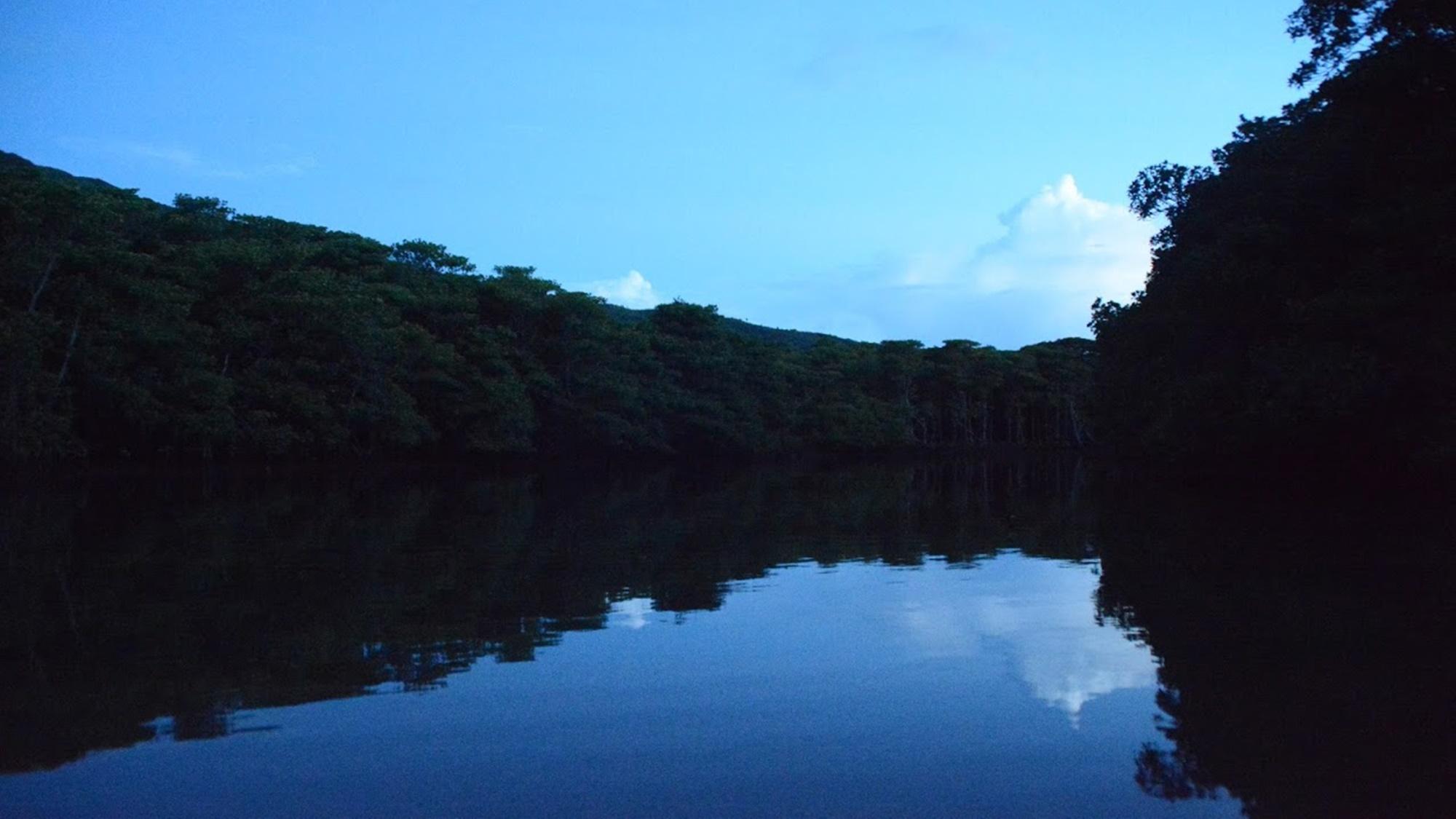 *静寂のジャングルに生き物たちの息吹が聞こえてきます。