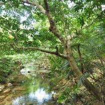 *ガーデン/敷地内に流れるホーラ川。せせらぎを聞きながらお過ごし下さい。