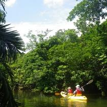 *カヌーツアー/ユツン川のジャングルを行く人気のツアー!!