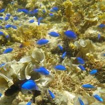 *海に中には原色の魚たちがいっぱい☆