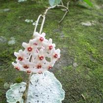 *サクララン/普段見ることの出来ない、珍しいお花や植物にワクワク☆