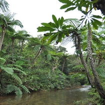 *周辺景色/普段見る事の出来ない、ワイルドな亜熱帯の景色が待っています!