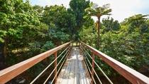 *敷地内/施設から密林へと続くホーラ橋。