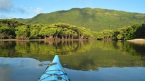 *カヌー体験/海の上から見る密林のジャングル。