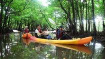 *カヌー体験/美しいマングローブの中を通り抜けて・・♪
