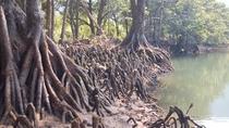 *ユツン川/マングローブが生い茂るユツン川。自然のパワーが溢れています。