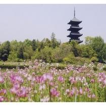 備中国分寺『五重の塔が有名な備中国分寺は四季によって様々な表情を見ることができます。』