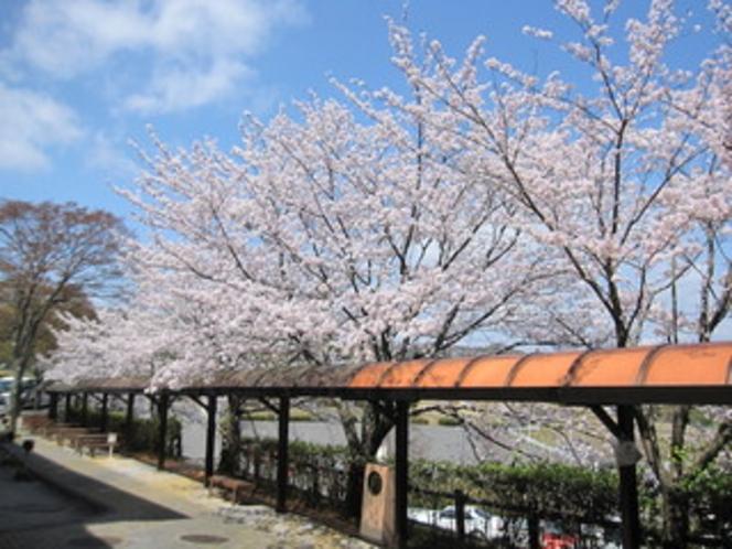 桜1(エントランス)