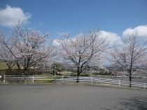 桜2(エントランス)