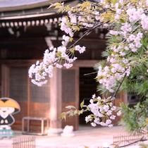 【春の高野山】