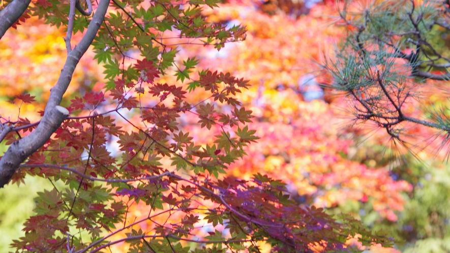 *秋には紅葉がキレイに色づきます