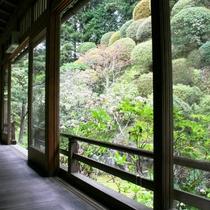 自然を取り入れた庭園〔別棟-離れ前の庭園〕