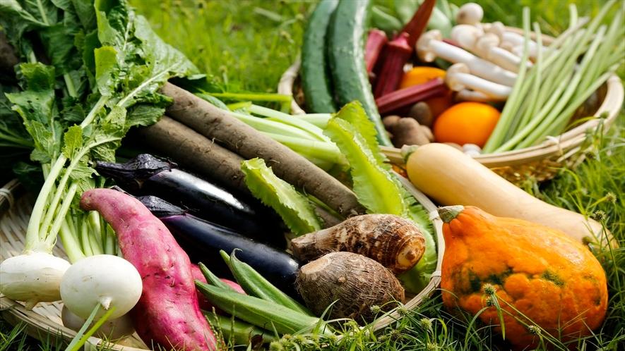 大和伝統野菜は必ず一種はお料理に使っています。自家農園でも旬野菜を栽培しています