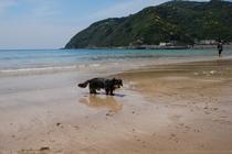 ペットと海水浴