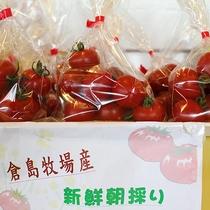 *売店/朝採りたての新鮮なプチトマト。売店には地元の農産物も並びます。