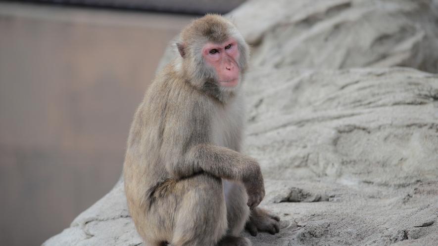 ■周辺観光(旭山動物園)_  当館から車で約30分♪