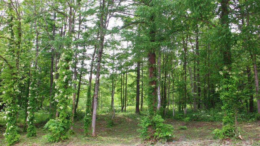 ■周辺観光_緑の中で森林浴!夏場なら涼しい気分に♪