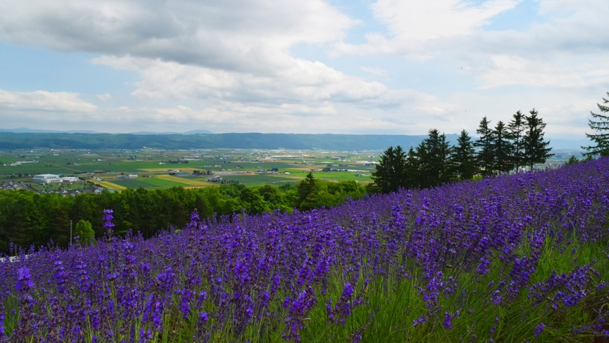 ■周辺観光(富良野)_一面に広がるラベンダー畑はフォトジェニック!