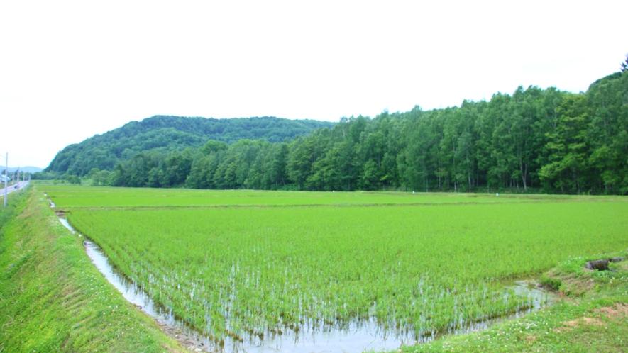 ■周辺_緑あふれる愛別の地をご堪能ください。