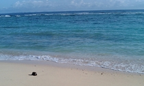 気が遠くなる時間、東シナ海を漂い流れ着いたヤシの実
