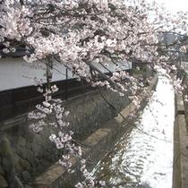 桜(江名子川)
