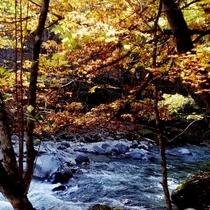 ◆敷地内・紅葉と宮川の流れ◆