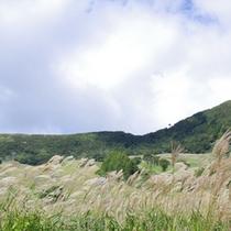 秋のハチ高原(イメージ)