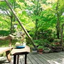 【庭園】当館の最も特徴的なスペースがこちらの庭園です。