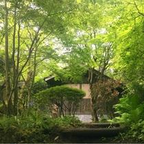 【緑のトンネル】大自然にかこまれた小松別荘