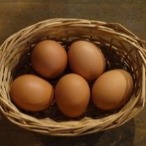 【たまごがけ御飯】黄身が濃い地鶏の卵 濃厚つやつや 美味しい♪