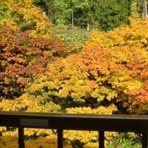*【紅葉】お部屋や露天風呂からも紅葉をお楽しみいただけます。