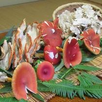 *【きのこ】秋の味覚♪旬の時期には、うまみたっぷりのきのこ料理をご提供いたします。