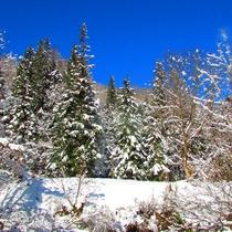 *窓の外には美しい雪景色が広がります。