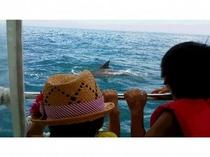 イルカが目の前