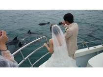イルカと花嫁さん♪