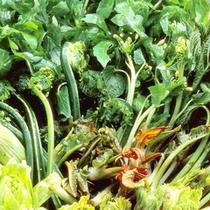 *採れたての山菜を、新鮮なうちに調理してご用意!