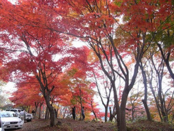 秋のもみじライン
