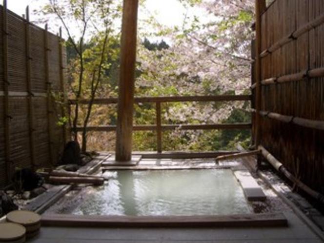 桜の花見露天風呂