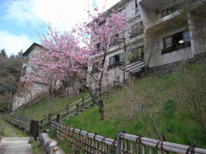 桜咲く春の裏庭