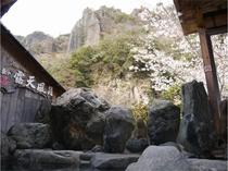 絶景の露天風呂よりの山桜は大変美しいです!!