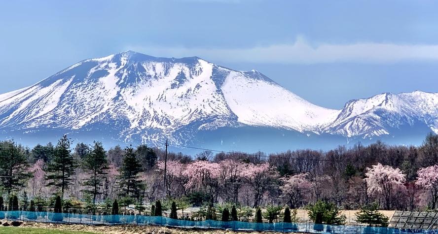 *周辺景色 (春)