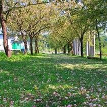 *黄桜公園